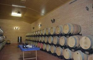 Bodega_Nueva_Valverde_Tejoneras_barricas_de-vinos